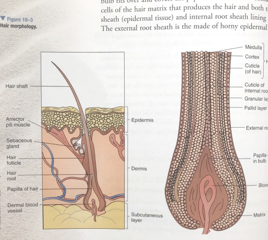 Hair Removal Methods - Cosmetic Composition